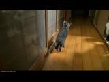 Кот научился просить, чтобы ему открыли дверь как человек